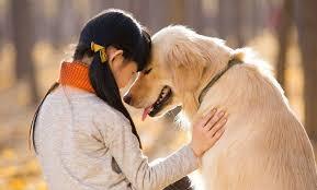 آیا علاقه به سگ ریشه ژنتیک دارد؟ - دامپزشک نیوز