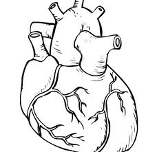Small Picture Coloring Pages For Adults Human Heart Coloring Page In Interior