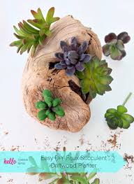 create a beautiful diy faux succulent driftwood planter with this easy step by step tutorial perfect for decorating a beach cottage for centerpieces for