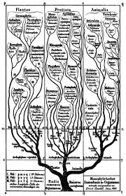 Six Kingdoms Characteristics Chart Kingdom Biology Wikipedia