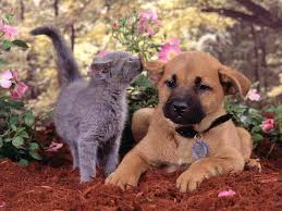 dogs and cats mating together. Modren Cats Dogs And Cats Mating Together  Photo5 On And Cats Mating Together O