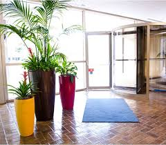Interior office plants Low Maintenance Celebrate Spring And Improve Your Arkansas Workplace With Indoor Plants Office Plants Archives Plantation Services