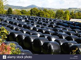 Black Bags Of Big Bale Silage Stored In Field On A Farm Near The