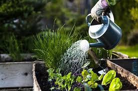 vegetable gardening 101 blog