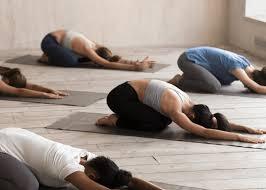 11 best yoga studios in wellington nz