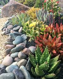 so what are the best rocks for your succulent garden