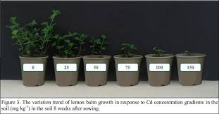 the variation trend of lemon balm growth in response to cd concentration grants mg kg