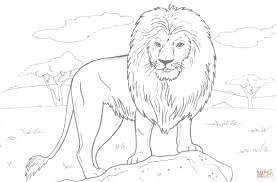 Small Picture Lion Color Page Lion Coloring Pages nebulosabarcom