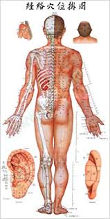 Acupuncture Meridian Chart Free Download The Wallchart Of Portable Acupuncture Meridian Points