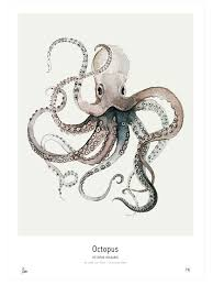 Small Picture 66 best Octopus Drawings Photos images on Pinterest Octopuses