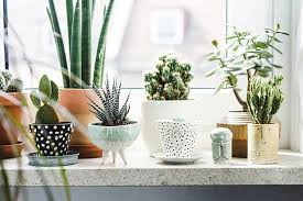 house plants indoor plants bamboo plants lucky bamboo plants potted plants