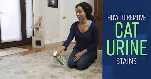 how to remove cat urine stains simple