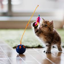 unusual gifts for cat lovers.  Gifts Temperamental Loners Indifferent To Human Affection Cats Have Long Played  Second Fiddle In Public Opinion Manu0027s Best Friend The Simpleminded Dog  And Unusual Gifts For Cat Lovers E