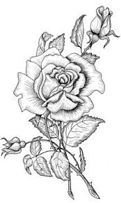 a beautiful rose to practice drawing find this pin and more on coloring pages