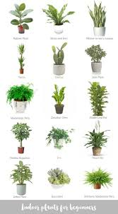 office plants no light.  Office Nice Office Plants No Light Indoor For Beginners Katrina Chambers Inside