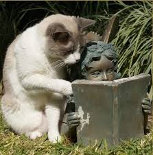 Image result for reading with cats