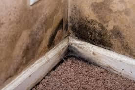 Mold in Corner of Basement