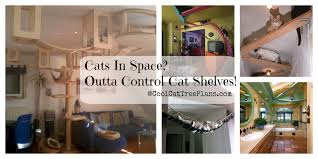 cat shelves ideas collage with 5 fun options