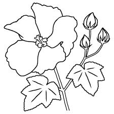 フヨウ芙蓉白黒夏の花無料イラスト素材