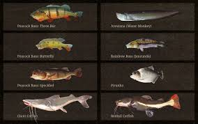 Types Of Bass Fish Chart Spots And Species From Amazon Brazil With Capt Peacock