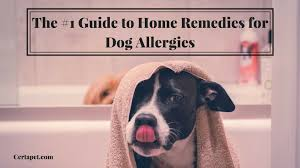 The #1 Guide to Home Remedies for Dog Allergies | CertaPet
