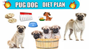 Pug Dog Diet Plan Pug Dog Diet Chart In Hindi Pug Dog Best Food
