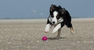 Eine der beliebtesten und meist verkauften hundetreppen bei amazon für kleine und mittelgroße hunde dürfte die karlie easy step hundetreppe sein. Durfen Welpen Treppen Laufen Welpenerziehung