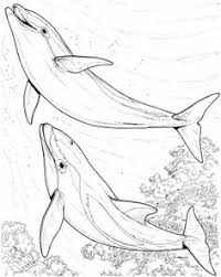 Small Picture A Group Of Dolphins In Open Water Area Coloring Page Animal