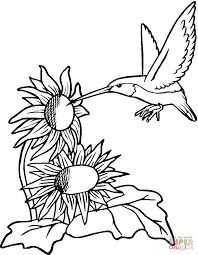 Small Picture Hummingbirds Coloring Pages At Hummingbird Coloring Pages