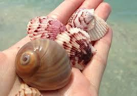 SeashellHand