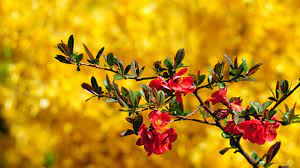 Beautiful flowers pictures ...