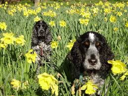 spring plants that are poisonous to your dog