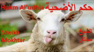 حكم الأضحية Hukm Al'udhia / الشيخ مختار Sheikh Mokhtar - YouTube