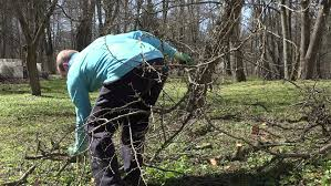 Cultivation Video Guides For Your Welsh Fruit TreesPruning Fruit Trees Video
