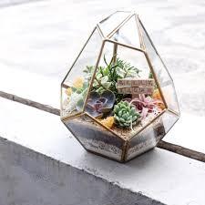 beautiful-terrarium