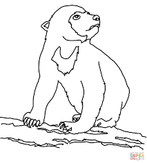 Small Picture Sun bears coloring pages Free Coloring Pages