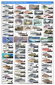 South Carolina Saltwater Fish Species Chart Poster Page