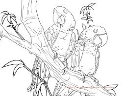 Small Picture Blue Macaw Coloring Page Free Printable Coloring Pages Coloring