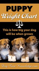 Boxer Puppy Weight Chart Puppy Weight Chart This Is How Big Your Dog Will Be