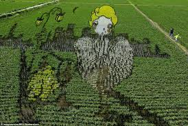 chinese rice field.  Rice Some Like It Hot One Field Appears To Display An Iconic Image Of Hollywood  Pin Throughout Chinese Rice Field O