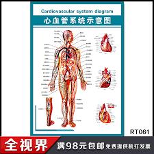 Usd 6 00 Cardiovascular System Diagram Anatomy Of Human