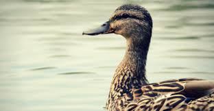 Ducks Unlimited Waders Size Chart Best Duck 2018