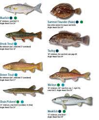 Chesapeake Bay Fish Identification Chart North Coast Fish Identification Guide North Free Download