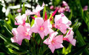 don s top six low maintenance plants