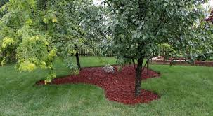 Tree landscaping ideas Juniper Mulch Around The Bottom Of Trees 59 Diy Landscaping Ideas Amazon S3 59 Diy Landscaping Ideas And Tips To Improve Your Outdoor Space Curbly