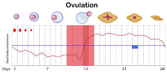 Ovulation Calculator Pregnancy Due Date