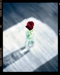 tim mccarthy the rose romantic most