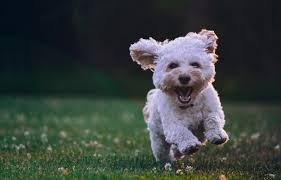 top 15 dog breeds in india size