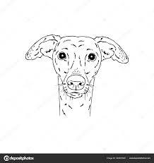 Italian Greyhound dog ⬇ Vector ...