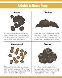 Fecal Scoring Chart The Scoop On Horse Poop Quarter Horse News